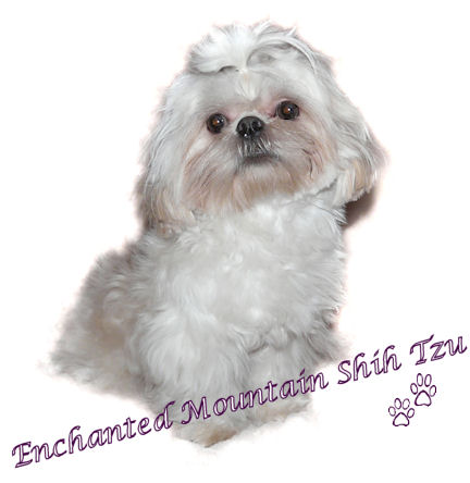 Enchanted Mountain Shih Tzu